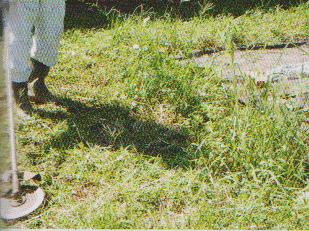 grass-mower13