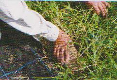 grass-mower4