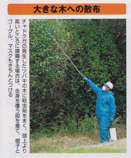 大きな木への噴霧器による撒布
