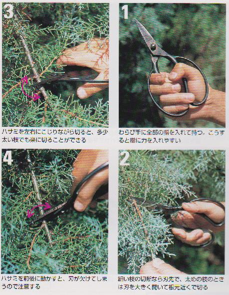 Garden-scissors5