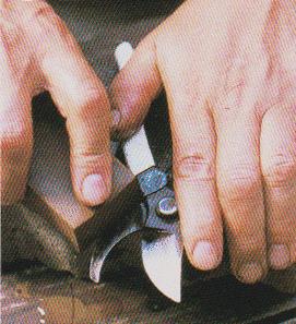 Pruning-scissors10