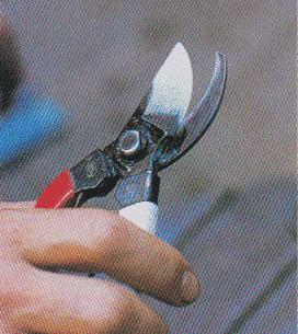 Pruning-scissors13