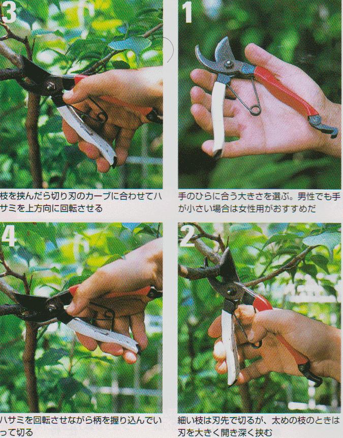 Pruning-scissors4