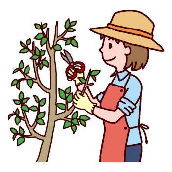 Pruning scissors5