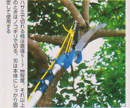 Scissors-for-high-branches10